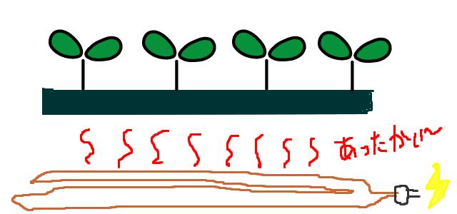 電熱線での育苗