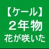 【ケール40】 とう立ち2/ケールに綺麗な花が咲いた(*´∀`)