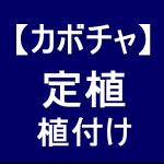 【カボチャ6】 定植/稲作の育苗ハウスに植えました!☆