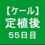 【ケール50】 生育/定植後55日目  ( ゚∀゚)ノ