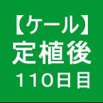 【ケール70】 生育/定植後110日目(`・ω・´)ゞ