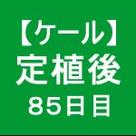 【ケール64】 生育/定植後85日目(o'ω')ノ