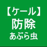 【ケール61】 防除/アブラムシ (「 ゚Д゚)「