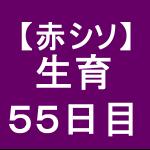 【赤シソ30】 定植後55日 (´ω`)