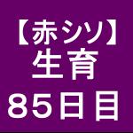 【赤シソ32】 定植後85日 (*゚ー゚)