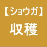 【ショウガ25】収穫作業/手ぼり~(;´д`)ゞ
