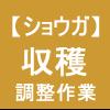 【ショウガ27】収穫後の調整作業~(゚⊿゚)