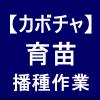 【カボチャ2】 育苗/ダークホースの種まきを行いました(´゚∀゚`)