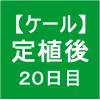【ケール32】 生育/定植後20日目(σ゚∀゚)σ