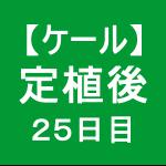 【ケール34】 生育/定植後25日目(´ー`)
