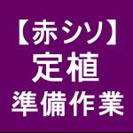 【赤シソ14】 定植/準備作業(アッパー、マルチ) (*´∀`)