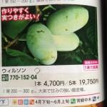 【ポポー】苗木を注文してみた~(*゚Д゚)