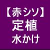 【赤シソ16】 定植/苗に水をかけてあげる~(`ω´*)