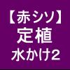 【赤シソ17】 定植/乾いた圃場に流し込み潅水!(*'v`)b