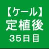 【ケール36】 生育/定植後35日目 (。´_`。)
