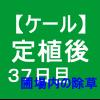 【ケール38】 生育/定植後37日目/圃場内の除草(´>∀<`)ゝ
