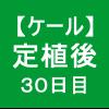 【ケール35】 生育/定植後30日目 ヾ(´Д`)シ