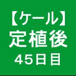 【ケール41】 生育/定植後45日目 (´∀`)