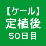 【ケール44】 生育/定植後50日目ヾ('ω')ノ