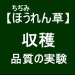 【寒締めほうれん草14】出荷した野菜が届くまでの日数?