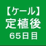 【ケール54】 生育/定植後65日目 (b゚v`*)