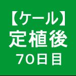 【ケール55】 生育/定植後70日目 ヽ(〃v〃)ノ