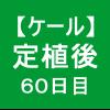 【ケール51】 定植60日後/コナガ ヽ(゚Д゚)ノ