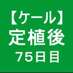 【ケール58】 生育/定植後75日目 (*´・ω・)