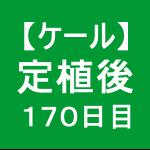 【ケール73】 生育/定植後170日目 (´゚д゚`)