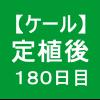 【ケール74】 生育/定植後180日目 ( ´・ω・)ノ