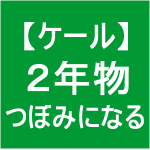 【ケール66】 とう立ち4/つぼみ(*´ェ`)ノ