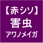 【赤シソ25】害虫/アワノメイガ(゚皿゚)