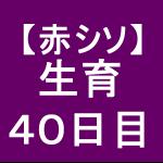 【赤シソ27】 定植後40日 (・ω・`)