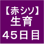 【赤シソ28】 定植後45日 (・д・`)