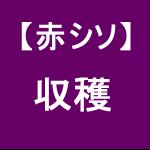 【赤シソ33】 収穫開始!!/定植後3ヶ月( ゚∀゚)ノ