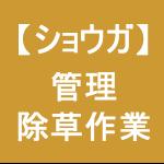 【ショウガ18】 うね間の除草作業 (´皿`)