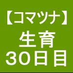 【小松菜6】 生育/播種後30日(*´ェ`)ノ