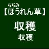 【寒締めほうれん草10】 収穫作業ぉぉ(´ω`)