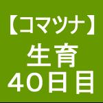 【小松菜7】 生育/播種後40日(´゚ω゚`)