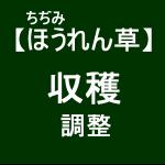 【寒締めほうれん草12】 袋詰め調整