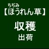 【寒締めほうれん草13】 JAへ出荷(-_-)