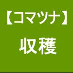 【小松菜8】 収穫/大失敗~(≧Д≦)